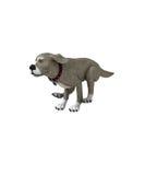 isolerad hund Arkivbilder