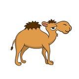Isolerad illustration av en kamel Fotografering för Bildbyråer