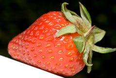 isolerad jordgubbe Arkivfoton