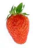 isolerad jordgubbe Arkivbild