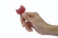 isolerad jordgubbe för svart hand holding Arkivbild