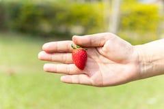 isolerad jordgubbe för svart hand holding royaltyfri foto