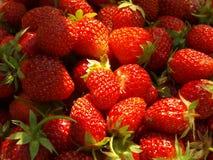 isolerad jordgubbewhite för bakgrund frukt arkivbild