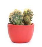 isolerad kaktus Fotografering för Bildbyråer