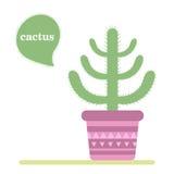 Isolerad kaktus i en kruka Symbol av kaktusblomman Spring är här igen Arkivbilder
