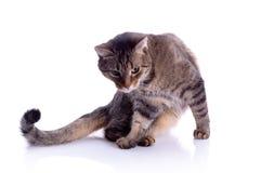 isolerad katt Royaltyfri Foto