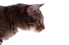 isolerad katt Royaltyfri Bild