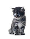 isolerad kattunge Arkivfoton
