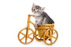 isolerad kattungewhite Fotografering för Bildbyråer