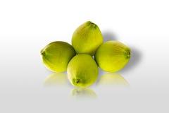 isolerad kokosnöt Arkivfoto