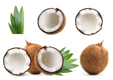 isolerad kokosnöt royaltyfri bild