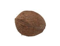 isolerad kokosnöt Royaltyfria Bilder