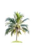 Isolerad kokospalm arkivbild