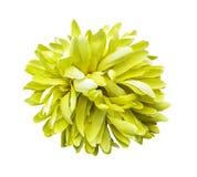 Isolerad konstgjord gul blomma fotografering för bildbyråer