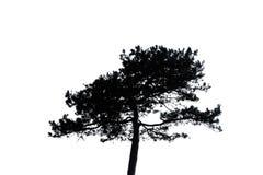 Isolerad kontur av det ensamma trädet Royaltyfria Bilder