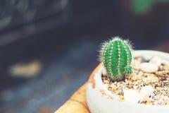isolerad krukawhite för bakgrund kaktus Arkivfoto