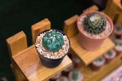 isolerad krukawhite för bakgrund kaktus fotografering för bildbyråer