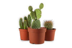 isolerad krukawhite för bakgrund kaktus Royaltyfri Fotografi