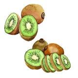 Isolerad lös frukt för exotisk kiwi i en vattenfärgstil Arkivfoton