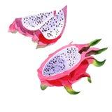 Isolerad lös frukt för exotisk pitaya i en vattenfärgstil Arkivbilder