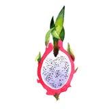 Isolerad lös frukt för exotisk pitaya i en vattenfärgstil Royaltyfri Foto
