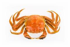 Isolerad lagad mat krabba Royaltyfri Bild