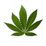 isolerad leaf Royaltyfria Bilder