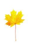 isolerad leaf för höst fall Royaltyfri Bild