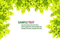 isolerad leaf för ram green Arkivfoto