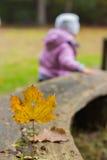 isolerad leaflönn Royaltyfri Foto