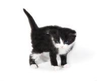 Isolerad liten gullig kattunge Fotografering för Bildbyråer