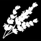 Isolerad logosymbol för lavendel blommor Vit kontur vektor vektor illustrationer