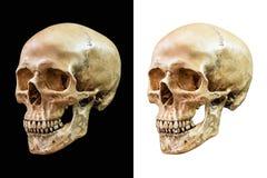 Isolerad mänsklig skalle Royaltyfri Foto