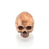 Isolerad mänsklig skalle arkivfoto