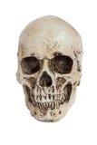 Isolerad mänsklig skalle på vit Arkivbilder