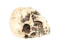 Isolerad mänsklig skalle på vit Arkivfoto