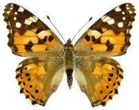 Isolerad målad damfjäril Arkivbilder