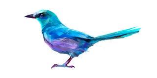 Isolerad målad sittande fågelnötskrika Royaltyfri Fotografi