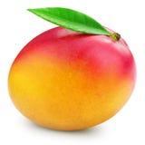 Isolerad mangofrukt arkivfoton