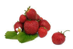 isolerad mogen jordgubbewhite Arkivbild