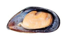 isolerad musslawhite Royaltyfri Bild