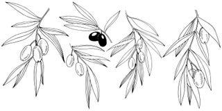Isolerad olivträd i en vektorstil royaltyfri illustrationer