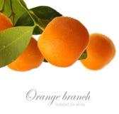 Isolerad orange filial Royaltyfri Foto
