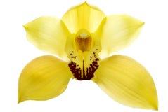 isolerad orchid Royaltyfria Foton