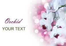 isolerad orchidwhite Arkivfoto