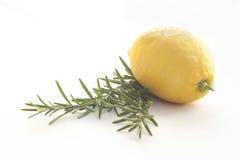 isolerad organisk rosmary white för citron royaltyfri bild