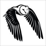 Isolerad owl i flyg Arkivbilder