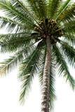 isolerad palmträd arkivbilder