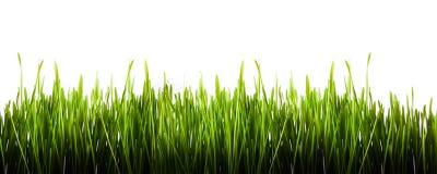 isolerad panorama för gräs green Royaltyfri Fotografi