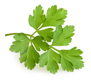isolerad parsley royaltyfria bilder